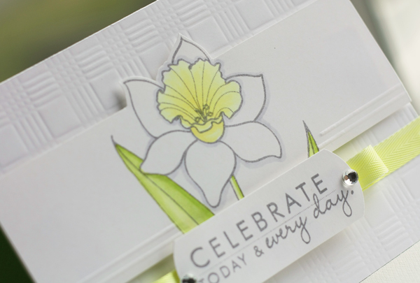 Celebrate-Daffodil-detail