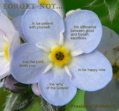 Forget-me-not-wikipedia